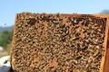 Beehive Honeycomb Workers - PhotoDune Item for Sale
