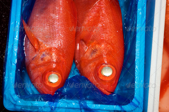two red fish at tokyo fish market - Stock Photo - Images