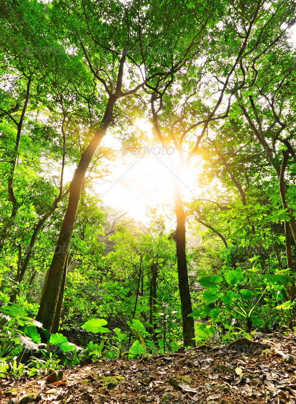 Morning sunbeam shine through green forest - Stock Photo - Images