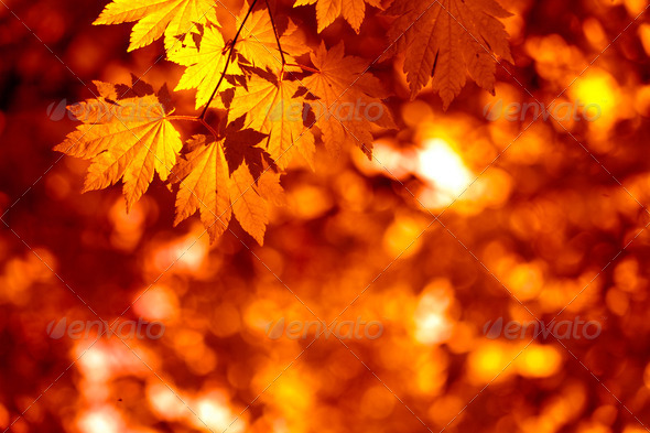 Autumnal leaves - Stock Photo - Images