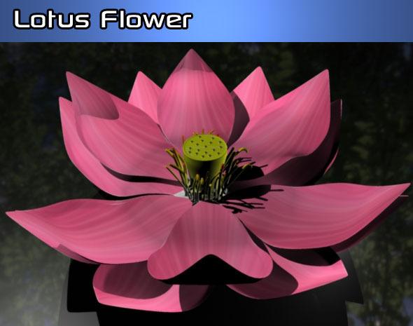 3DOcean Lotus Flower 924349