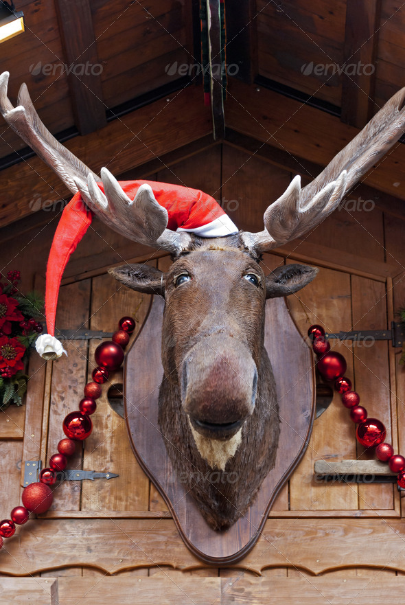 Christmas Moose - Stock Photo - Images
