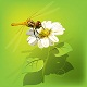 Dragonfly on flower - GraphicRiver Item for Sale