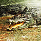 Crocodiles Life - VideoHive Item for Sale