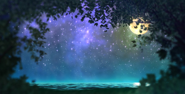 Night forest loop VideoHive Motion Graphic  Backgrounds  Nature 124281