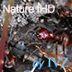 Ants nest. Macro. - VideoHive Item for Sale
