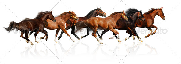 Herd Gallops - Stock Photo - Images