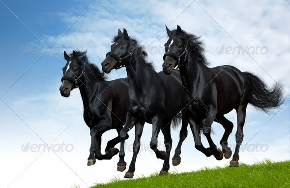 Russian Troika Gallop - Stock Photo - Images