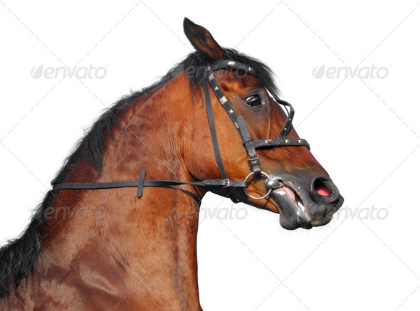 Portrait of Horse - Stock Photo - Images