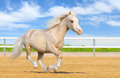Welsh Pony - PhotoDune Item for Sale