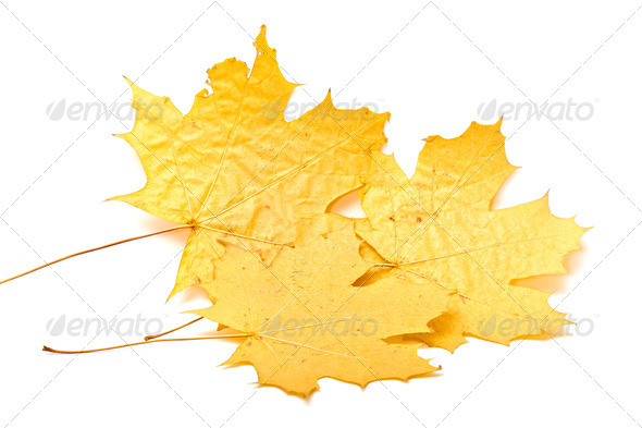 yellow leaf - Stock Photo - Images