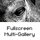 Fullscreen Multi-Gallery - ActiveDen Item for Sale