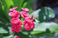Wasp Pollinating - PhotoDune Item for Sale