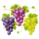 Three cluster of grapes - GraphicRiver Item for Sale