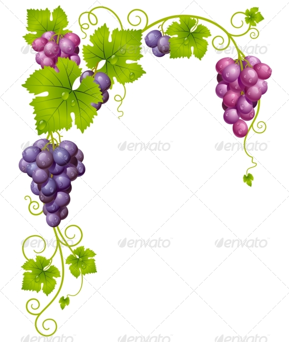 Graphic River Vector grape frame 03 Vectors - Decorative Backgrounds ...