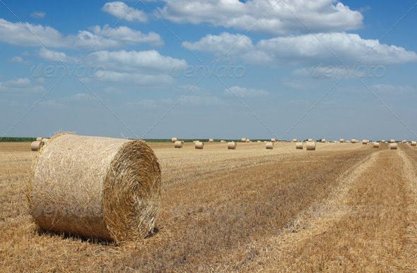Agriculture straw bale - Stock Photo - Images