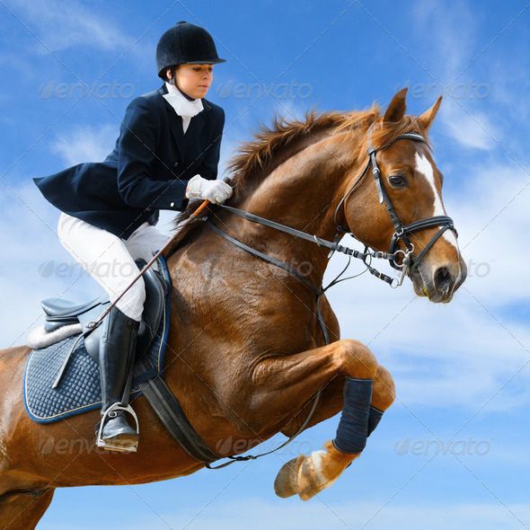 Equestrian Sport - Show Jumping - Stock Photo - Images