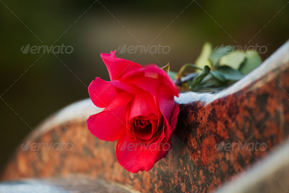 Stock Photo - PhotoDune Rose On The Tombstone 1171535