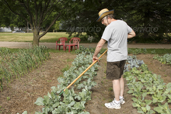 weeding the garden - Stock Photo - Images