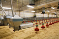 poultry farm - PhotoDune Item for Sale