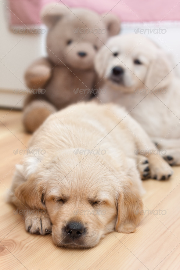 Funny small dog - Stock Photo - Images