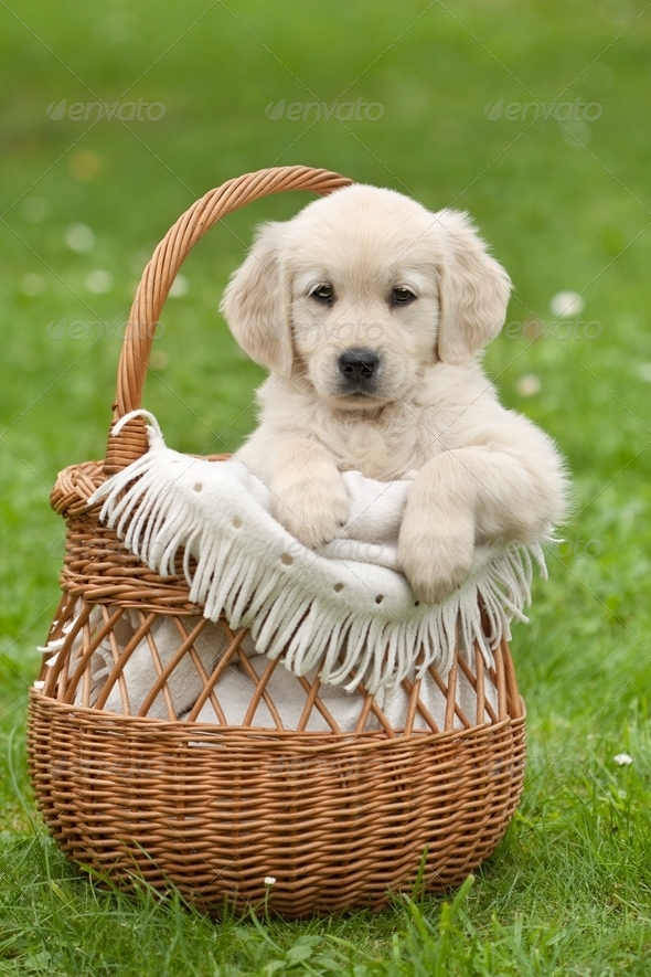 Small beautiful puppy - Stock Photo - Images