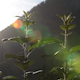 Plant With Backlight - VideoHive Item for Sale