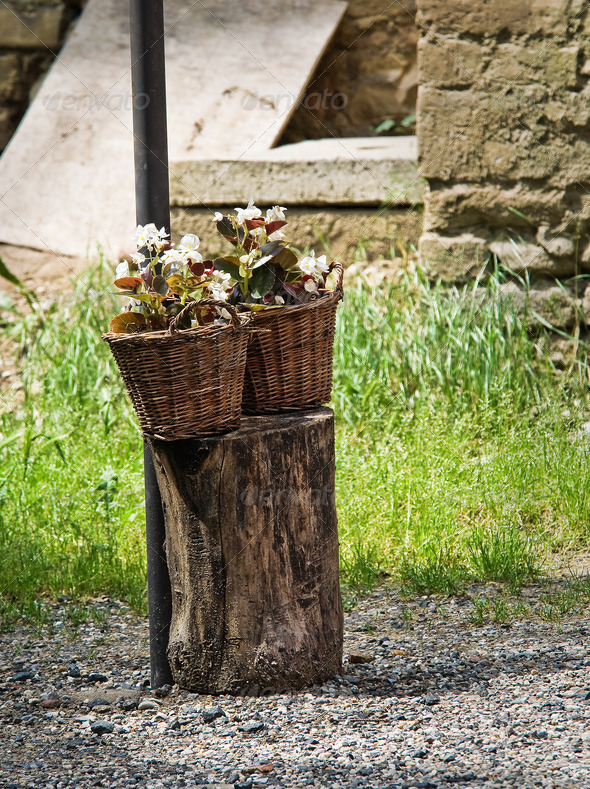 Wicker baskets with flowers. - Stock Photo - Images