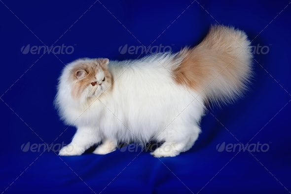 Pet cat - Stock Photo - Images