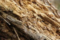 Rough Rotten Wood Texture - PhotoDune Item for Sale
