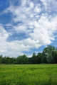 Landscape of a green field with trees - PhotoDune Item for Sale