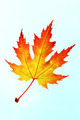 Autumn Leaf - PhotoDune Item for Sale