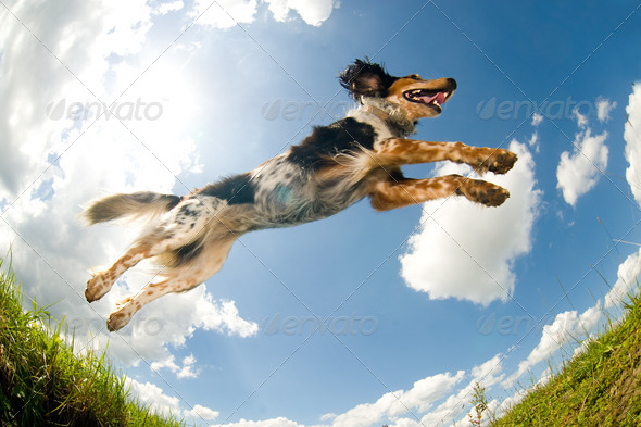 PhotoDune Jumping dog 1275192