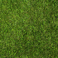 natural green grass - PhotoDune Item for Sale
