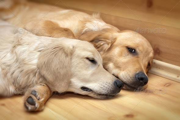 View of two dogs lying - Stock Photo - Images