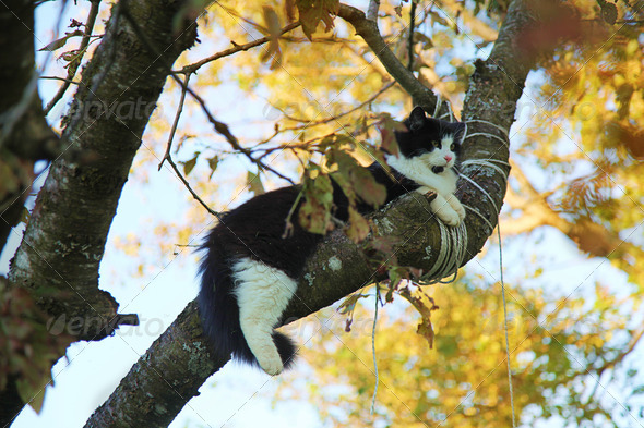 cat on a tree - Stock Photo - Images