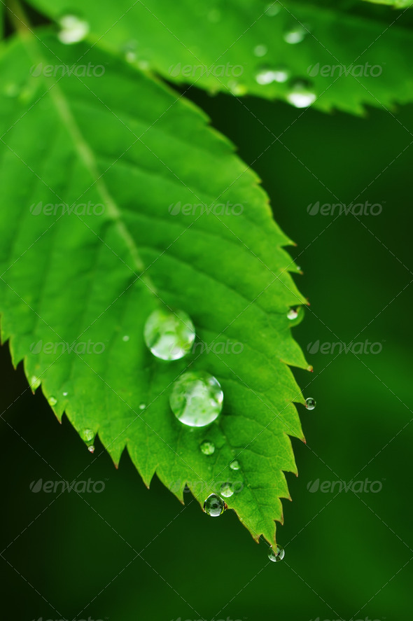 Water drops on a grass - Stock Photo - Images