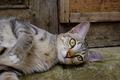 Cat Lying Outside - PhotoDune Item for Sale
