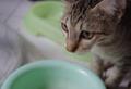 Cute Kitten - PhotoDune Item for Sale