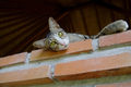 Cat Lying on Wall - PhotoDune Item for Sale