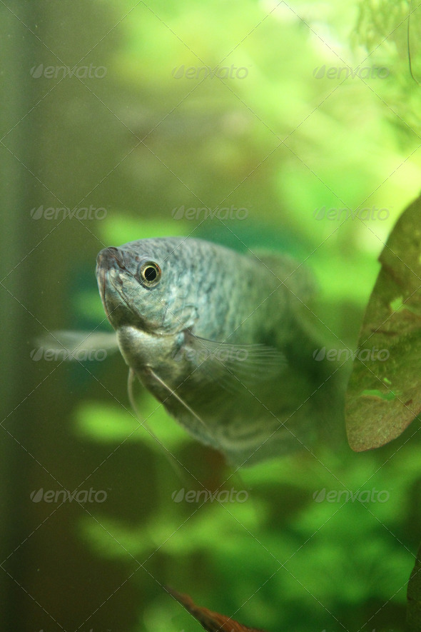 bright blue fish - Stock Photo - Images