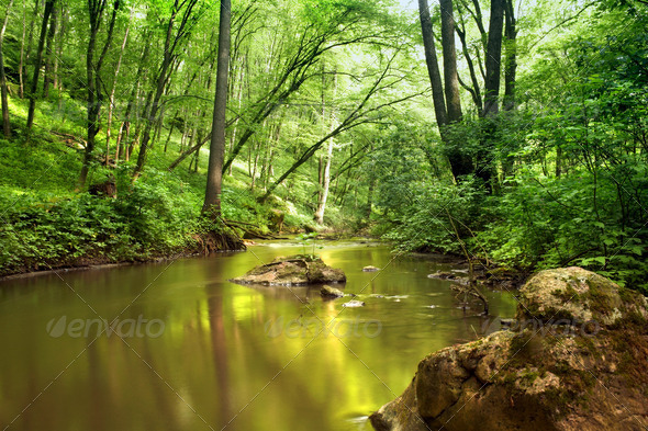 River in forest - Stock Photo - Images