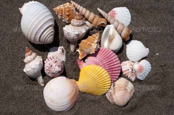 Sea shells - Stock Photo - Images