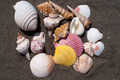 Sea shells - PhotoDune Item for Sale