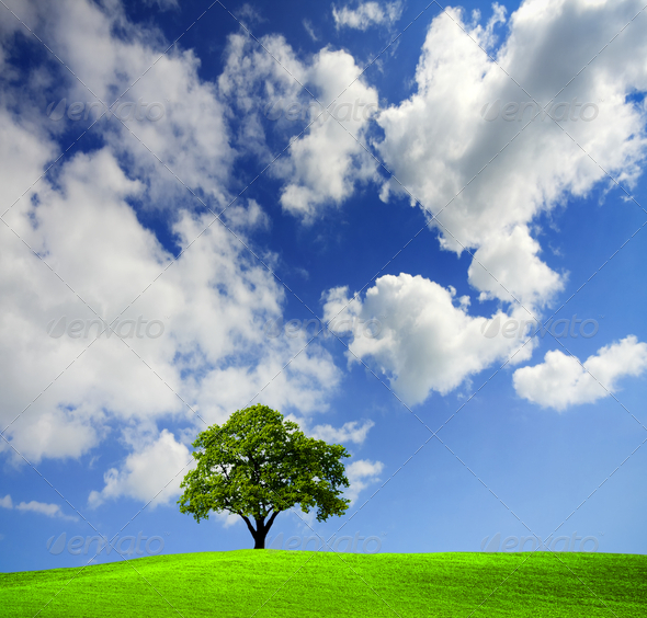 Green tree in a field - Stock Photo - Images