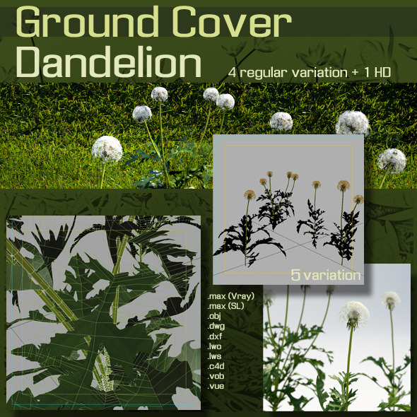 3DOcean Ground Cover Dandelion 3D Models -  Plants  Flowers 1370444