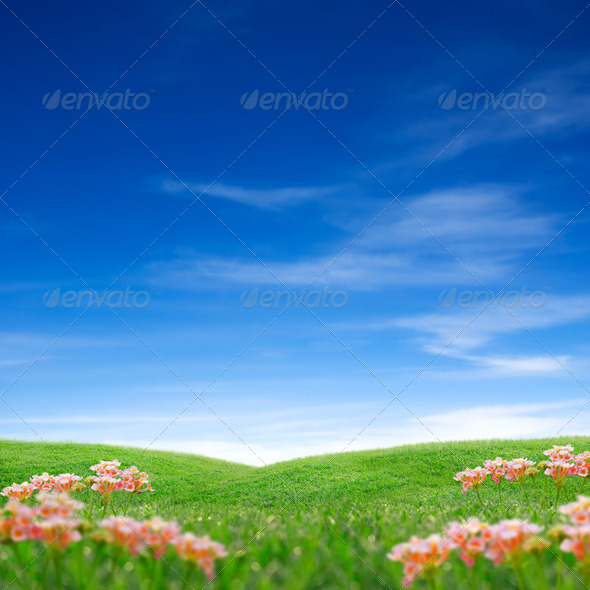Spring grass sky - Stock Photo - Images