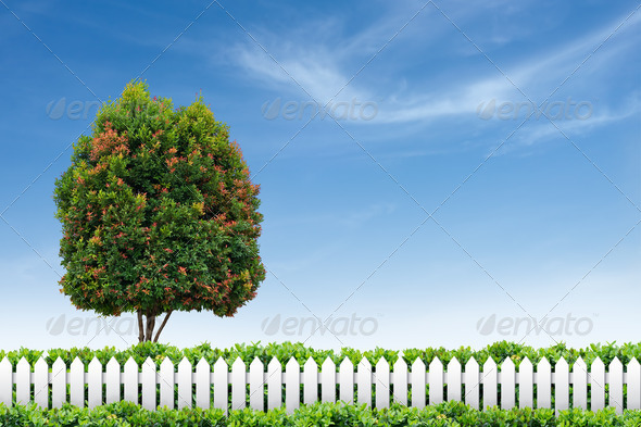 White fence and tree - Stock Photo - Images
