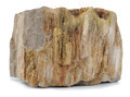 Petrified Wood - PhotoDune Item for Sale