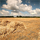 Hay Bale Scenery  - VideoHive Item for Sale